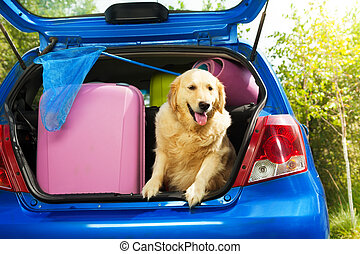 Dogs and luggage to go on trip - Close shoot of a dog and...