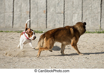 Dogs are playing on the sand