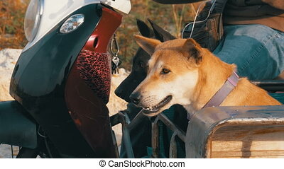 Dogs are sitting in a trailer of a Thai motorcycle with a...
