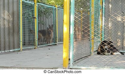 Dogs At The Shelter - In the dog shelter provides even...