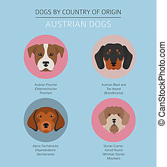 Dogs by country of origin. Austrian dog breeds. Infographic template. Vector illustration