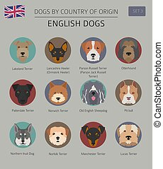 Dogs by country of origin. English dog breeds. Infographic...