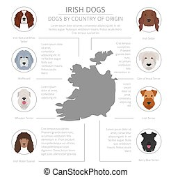 Dogs by country of origin. Irish dog breeds. Infographic template