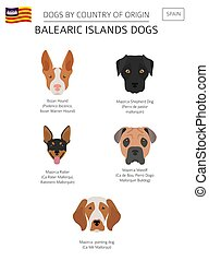 Dogs by country of origin. Spain. Balearic islands dog...