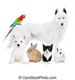 Dogs, cat, bird, rabbits - in front of a white