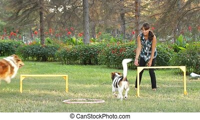 A girl playing ball with her two dogs in the park.