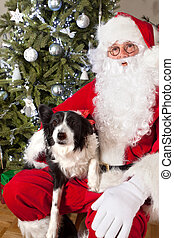 Dog's christmas