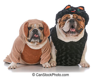 dogs dressed like cat and dog