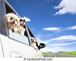 dog's family traveling in the car