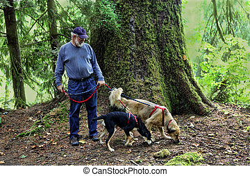 Dogs Following Scent Trail - Man in forest with two dogs...