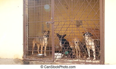 Dogs  in cage - Dogs locked in the cage