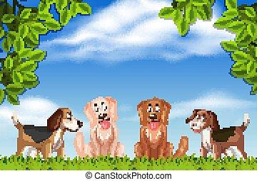 Dogs in park scene