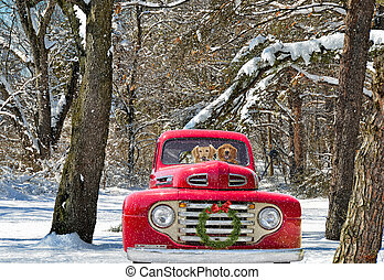 Golden retrievers in red vintage pick up truck with wreath in winter woods.