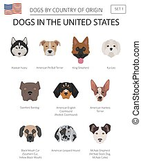 Dogs in the United States. American dog breeds. Infographic...