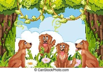 Dogs in woods scene