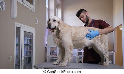 Dog's internal organs health check by veterinarian - Young...
