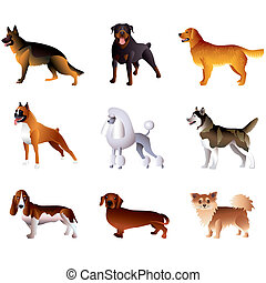 Popular purebred dogs isolated on white colorful vector collection