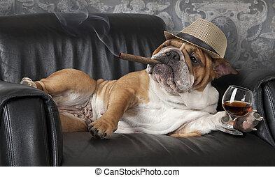 Dog's life - Humorous photograph of English Bulldog resting ...