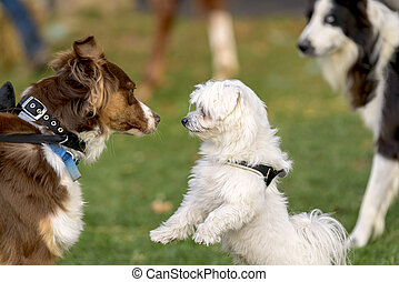 dogs meeting - dogs who meet in a park