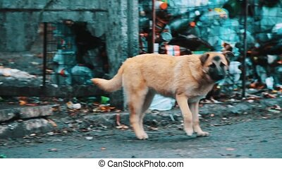 Dogs near the trash - Dogs who are looking for food in trash...