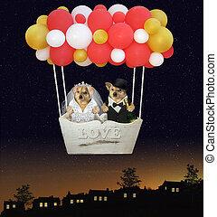 Dogs newlyweds in balloon 2