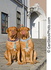 Dogs on a sidewalk