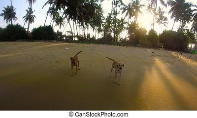 Dogs on a tropical beach
