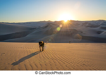 Dogs on Sand Dunes