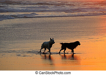 Dogs on scenic beach at sunset