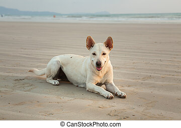 Dogs on the beach at Khao Lak in the evening. Waiting for food