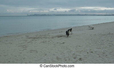 Dogs on the beach looking for food