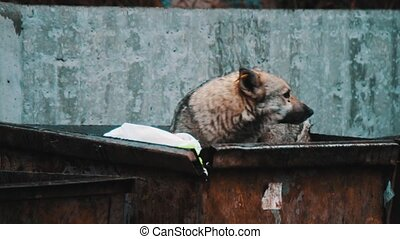 Dogs on the trash - Dogs who are looking for food in trash...
