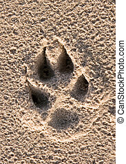 dogs paw print in the beach sand