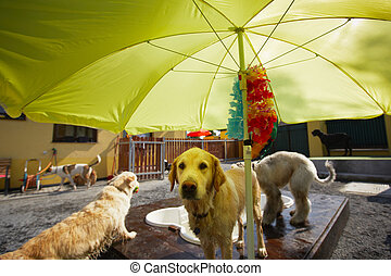 dog?s, piscina
