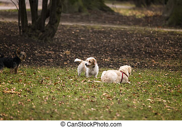 Dogs Playing in a Park in Autumn
