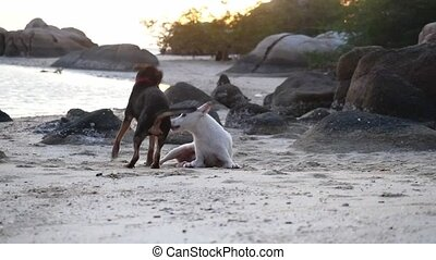 Dogs playing on the shore of the sea at beautiful sunset....