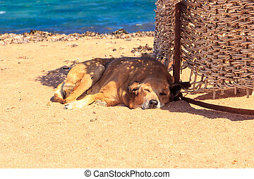 Dogs relax on the beach