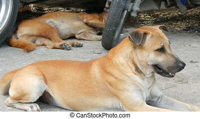 Dogs rest on streets of the city
