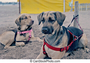dogs resting in the beach
