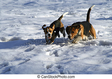 Dogs running on the snowy meadow