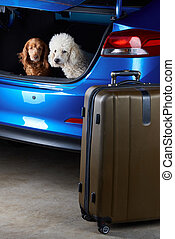 Dogs sitting in car trunk