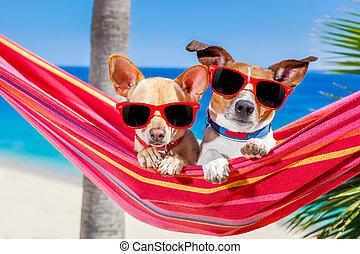 dogs summer hammock