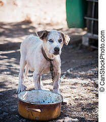 Dogs that are chained - Young dog on a chain on a nature...