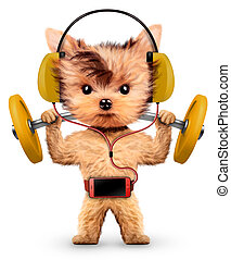 Dogs training with barbell and listening music - Funny dogs...
