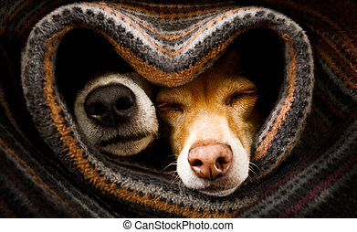 dogs under blanket together - couple of dogs in love ...