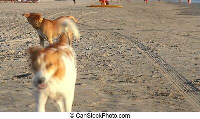 dogs walking on the beach.