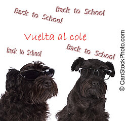 dogs with signs of back to school