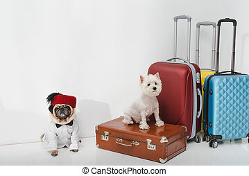Good Ribbon Bow Adorable Dog - dogs-with-suitcases-two-adorable-dogs-sitting-with-suitcases-on-white-stock-photograph_csp53133597  Graphic_216745  .jpg