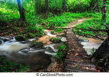 doi, inthanon, natie, voetbrug, rainforest, dalingen, door