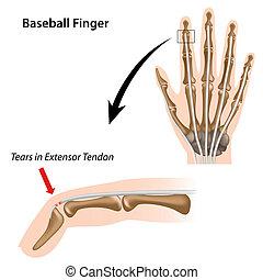 doigt, base-ball, eps8